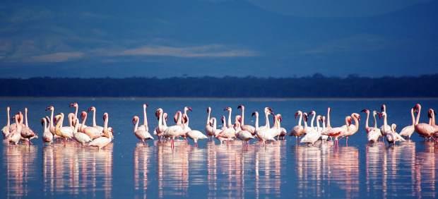 "Se ""muere"" el lago Nakuru en Kenia, famoso por sus flamencos"