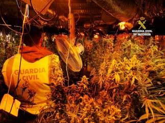 Cádiz.- Sucesos.- Detenidas dos personas e intervenidas 311 plantas de marihuana en San Roque