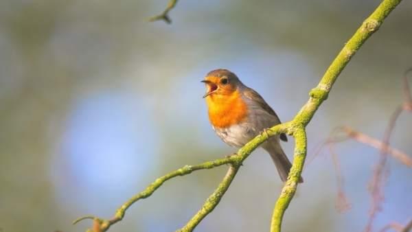 Valderejo (Álava) acoge este sábado un 'Concierto de aves' para aprender a identificar a cada especie por su canto