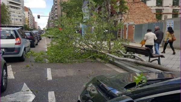 Sucesos.- Un árbol, derribado por el viento, cae sobre un coche en marcha en Valladolid sin causar daños al conductor