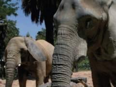 Zona de elefantes del zoo de Barcelona.