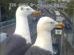 Gaviotas de Brunswick Road