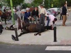 Caballo cae rendido en la Feria de Abril