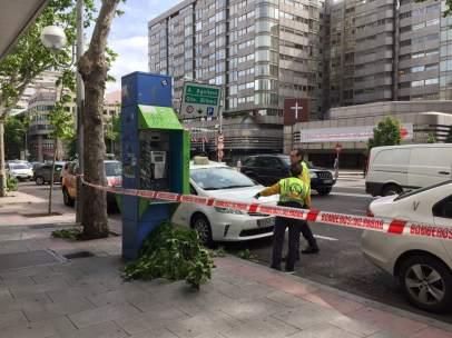 Herido un taxista al caerle una gran rama de un árbol en la calle Princesa