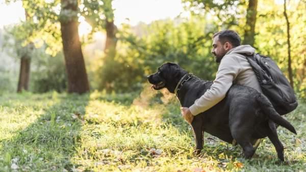 Todo lo que tienes que saber para viajar con tu mascota este verano