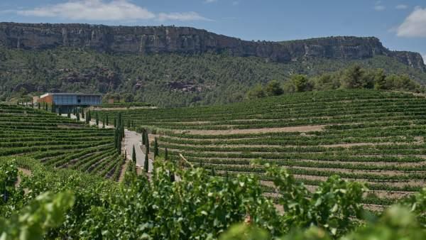 Agro.- El vino Salmos 2016 de Familia Torres obtiene el Priorat Trophy