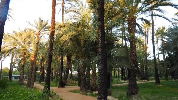 La Región de Murcia celebra el Día de la Fascinación por las Plantas recordando la importancia de las palmeras europeas