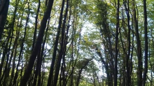 Sucesos.- Rescatada una mujer en Pomar (Palencia) tras quedar colgada en un árbol cuando practicana ala delta