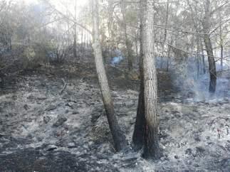 Alicante.- Sucesos.- Un incendio calcina media hectárea de un pinar en una urbanización de Xàbia
