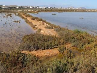Alicante.- Amigos de los Humedales rechaza la segunda pista del aeropuerto por el 'grave impacto ambiental'