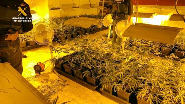 Desmantelan una plantación de marihuana en Sonabia e intervienen cinco tipos de drogas