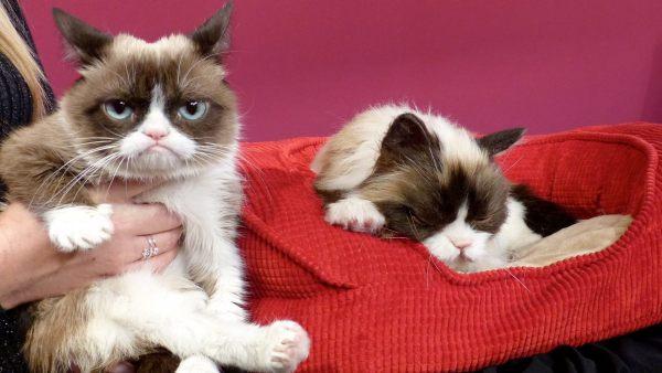 Muere el gato más famoso de internet