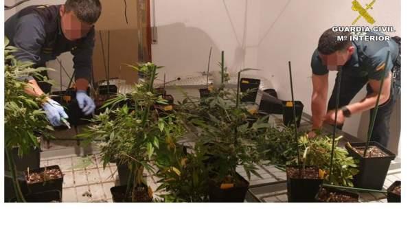 Alicante.- Sucesos.- Dos detenidos en un operativo contra una plantación indoor de marihuana con 200 plantas en Monòver