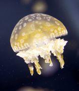 Acuario para proteger a las especies marinas