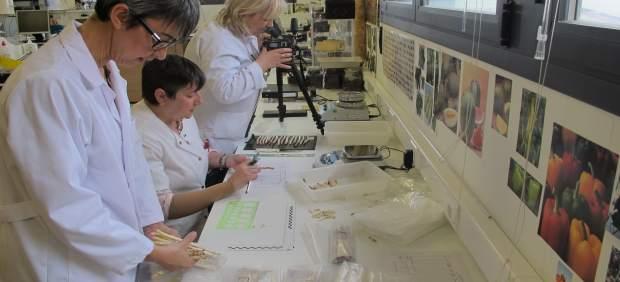 El CITA trabaja en la conservación y tipificación del espárrago tradicional de Barbastro