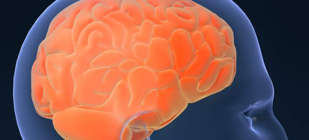 Nuestro cerebro se da cuenta de que estamos muertos: sigue activo unos minutos después del ...
