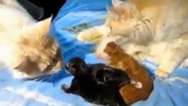El chasco que se lleva un gato al ver a dos de sus hijos