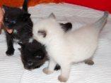 Tres gatitos