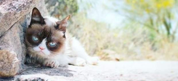 El lado oscuro de Grumpy Cat: su fama se debía al enanismo, una enfermedad ahora considerada una ...