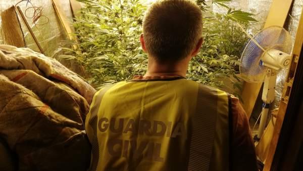 Detenidos dos jóvenes hermanos de Baiona (Pontevedra) por una 'plantación indoor' de marihuana en una vivienda