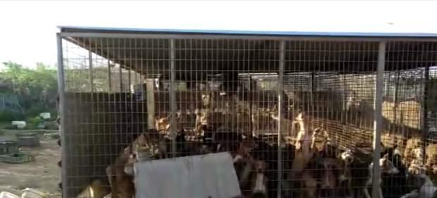 Pacma denuncia zulos ilegales en Canarias con perros hacinados, atados y que comen sus propias heces