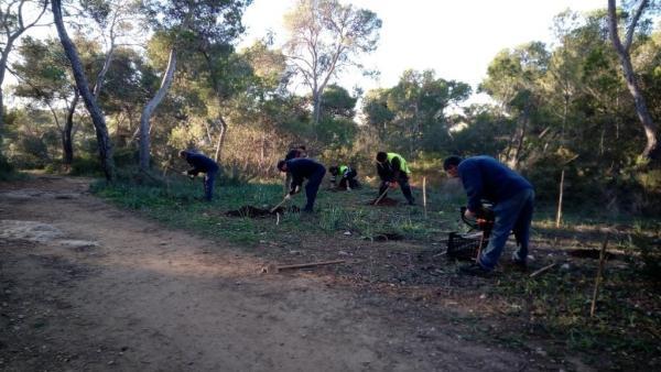 CCOO convocará huelga indefinida en Parques y Jardines de Palma si no se modifican los pliegos de las contratas