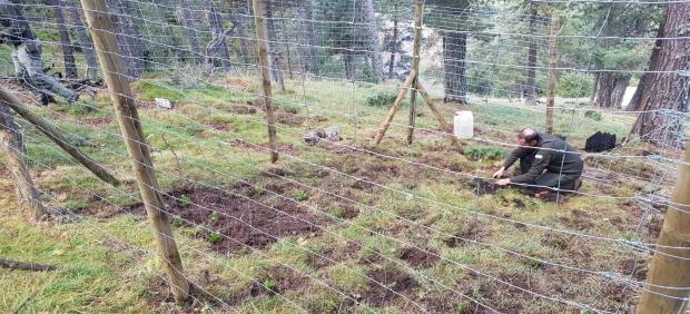 Endesa participa en la mejora del hábitat del urogallo en la Reserva de Boumort (Lleida)