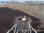 Una cigüeña sobrevive a un incendio