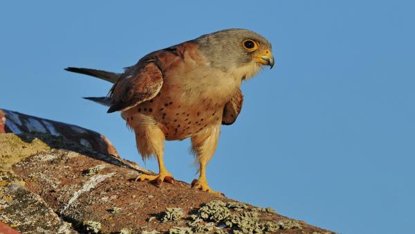 El conjunto monumental de Cáceres se convierte este fin de semana en un gran observatorio de aves con 50 actividades
