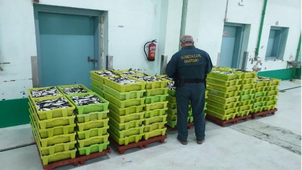 Pesca.- Intervenidos más de 2.000 kilos de sardina en Carballo sin el etiquetado que garantice su trazabilidad