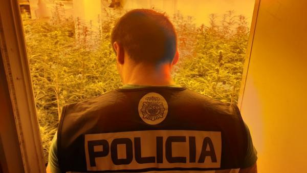 LA POLICÍA NACIONAL DESMANTELA EN FINESTRAT UNA PLANTACIÓN INDOOR DE MARIHUANA Y DETIENE A UNO DE SUS RESPONSABLES