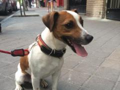 Pecas, el perro de Esperanza Aguirre.
