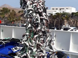 Sucesos.- Detenidas tres personas por robar 4.600 kilos de pescado en una piscifactoría de Lanzarote