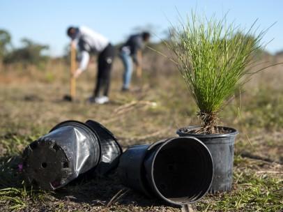 Voluntarios plantando árboles