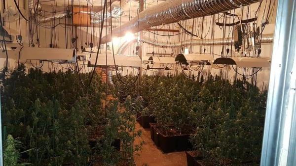 Huelva.-Sucesos.-Detenidos tres responsables del cultivo de una plantación de marihuana en Valverde del Camino