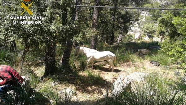 La Guardia Civil localiza un caballo que se hallaba atrapado en el torrent des Horts