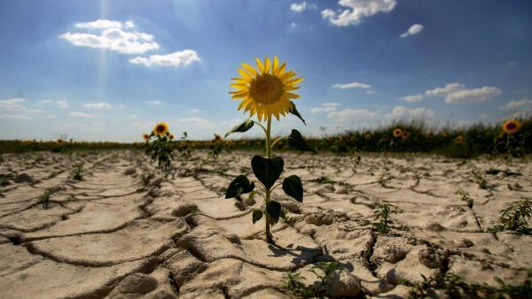 Clavijo y Arias Cañete protagonizarán dos 'diálogos ciudadanos' en Canarias sobre el cambio climático