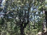 Convocadas ayudas para la reforestación y creación de superficies forestales, que se podrán solicitar durante 30 días