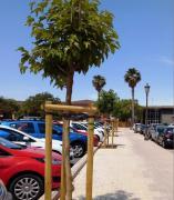 Plantación de arbolado en València