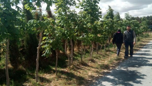 El colectivo Crea_NdO de Navas de Oro (Segovia) recaudará fondos para plantar árboles en varios puntos del municipio