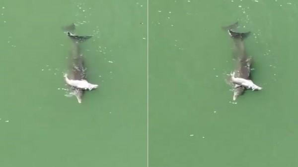 La mamá delfín junto a su cría