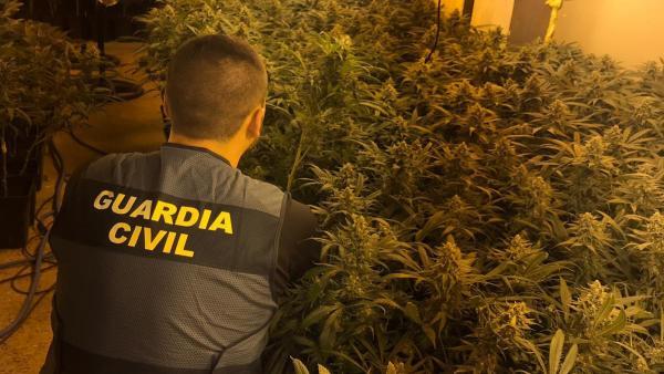 Sucesos.- La Guardia Civil se incauta de más de 1.000 plantas de marihuana y detiene a una persona en Pioz (Guadalajara)