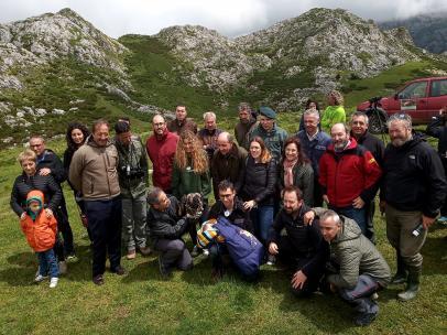 Tres ejemplares de quebrantahuesos llegan al Parque Nacional de los Picos de Europa