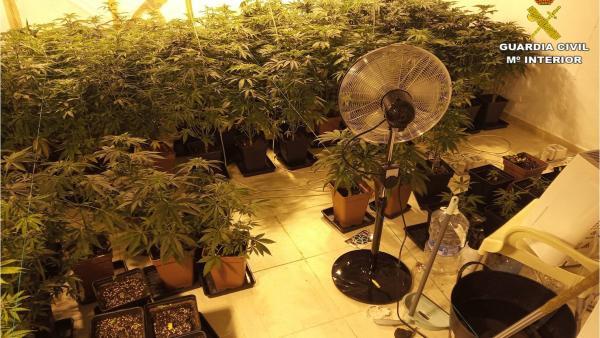 Alicante.- Sucesos.- Descubren una plantación de marihuana al acudir para investigar un supuesto asalto a una vivienda