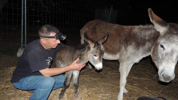 Localizadas dos de las tres crías de burro robadas el pasado domingo en Hinojos (Huelva)