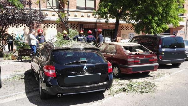 Suc.- La caída de un árbol de grandes dimensiones en la calle Vía de Valladolid provoca daños en varios turismos