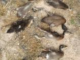 Matan una familia de patos a patadas