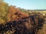 Córdoba.- Ecologistas critican la intencionalidad de dos incendios en la misma semana cerca del futuro Parque de Levante