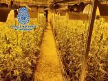 LA POLICÍA NACIONAL DETIENE A SIETE  PERSONAS Y DESMANTELA UNA PLANTACIÓN DE MARIHUANA DE MÁS DE 4000 PLANTAS