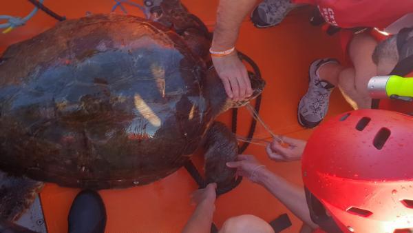 Cruz Roja rescata a una tortuga marina herida al quedar enganchada a un arte de pesca